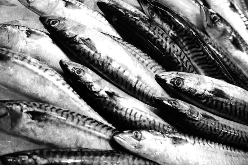 Image: Mackerel
